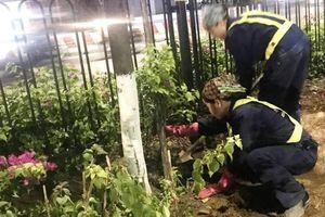 Hà Nội: Công nhân trồng hoa giữa đêm để... trốn nắng nóng