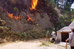 Khởi tố người phụ nữ đốt cỏ gây cháy rừng ở Hà Tĩnh