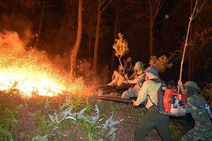 Cần chủ động, tích cực hơn trong phòng cháy, chữa cháy rừng