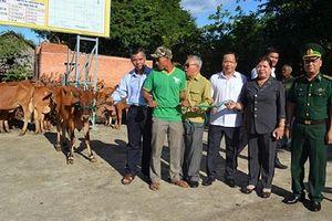 Ðác Lắc hỗ trợ bò sinh sản cho các hộ nghèo