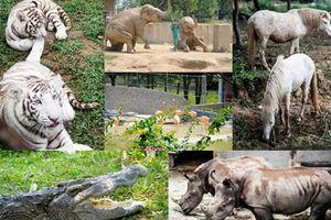 Vườn thú đẳng cấp của 'đại gia điếu cày' Lê Thanh Thản tại quê nhà