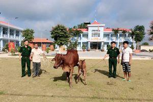Trao tặng bò giống cho hộ nghèo khu vực biên giới
