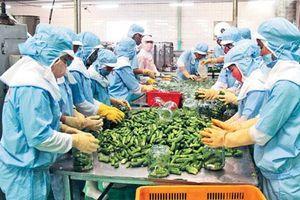 Chủ động khơi thông thị trường xuất khẩu nông sản