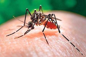 Sốt xuất huyết bùng phát mạnh trên cả nước với 71.000 ca nhiễm bệnh