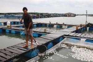 73.460 con cá lồng bè chết trên sông Chà Và