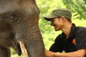Khám phá một ngày làm việc của những 'bảo mẫu' voi rừng Tây Nguyên