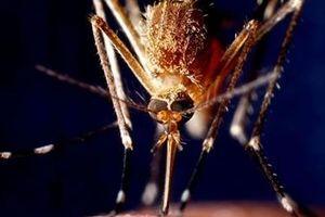 Sử dụng mô hình khí hậu để dự báo dịch bệnh do muỗi