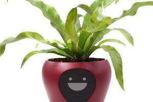 Siêu cool: Chậu trồng cây thông minh tiết lộ cảm xúc của cây trồng