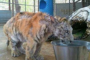 Sở thú ngược đãi động vật đến chết và sự thờ ơ của chính quyền