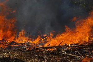 3 vụ cháy rừng trong một ngày ở Quảng Ngãi