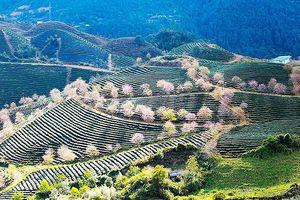 Lào Cai hướng tới là trọng điểm thu hút khách du lịch