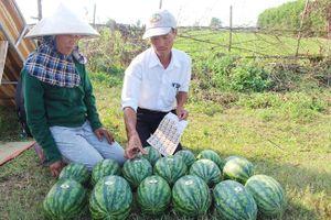 OCOP là trọng tâm của Chương trình xây dựng nông thôn mới Quảng Trị
