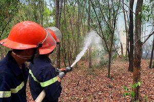 Chủ động triển khai phòng, chống cháy rừng