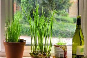 Mách bạn các loại cây gia vị có thể trồng tại nhà