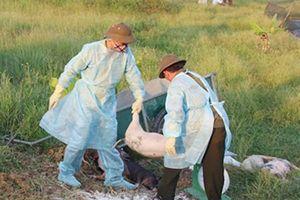 Hà Tĩnh: Cảnh báo các vùng chưa có dịch tả lợn châu Phi