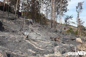 22 tiếng đồng hồ chìm trong biển lửa, 107 ha keo lá tràm ở Quảng Nam bị thiêu rụi