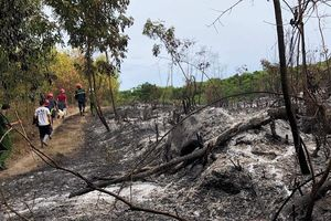 Một ngày xảy ra 3 vụ cháy rừng, hàng trăm người dân Quảng Ngãi căng mình dập lửa