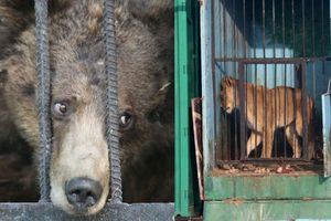 Bí mật tàn nhẫn sau song sắt các sở thú không muốn khách biết