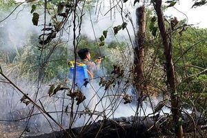 Cháy hơn ba ha rừng keo tràm ở Thừa Thiên - Huế