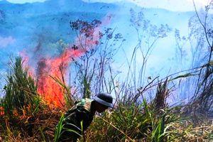 Lại cháy rừng dữ dội tại TT-Huế