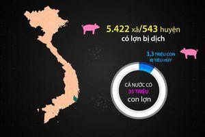 Hơn 3 triệu con lợn nhiễm dịch tả Châu Phi bị tiêu hủy