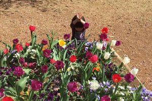 Bức ảnh 'đốn tim' nhất MXH hôm nay: Chơi trốn tìm với mẹ, em bé hồn nhiên tạo hình 'bông hoa' bên luống tulip
