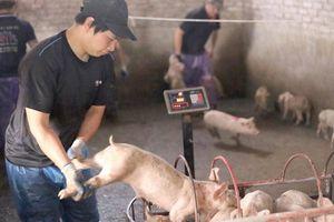 Dịch tả giết 3,3 triệu lợn, nhiều nơi hết tiền hỗ trợ dân
