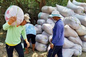 Nợ tiền mua lúa 10 tỷ đồng, giám đốc Trung tâm bị đình chỉ