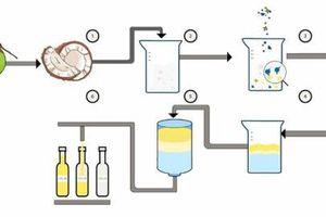 Startup ứng dụng công nghệ cao trong chiết xuất dầu dừa
