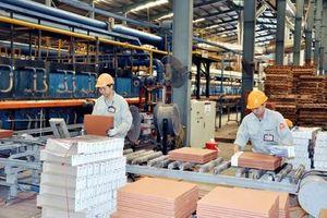 Doanh nghiệp tư nhân là đầu tàu 'dẫn dắt' nền kinh tế