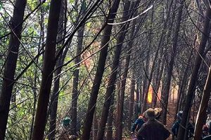 Huy động 200 người chữa cháy rừng tại Thừa Thiên Huế