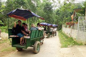 Xe trâu, vận tải du lịch độc đáo