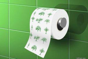 Nhiều khu rừng bị đe dọa vì các công ty giảm sản xuất giấy tái chế