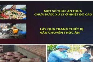 Thức ăn thừa - 'thủ phạm' khiến dịch tả châu Phi khó kiểm soát