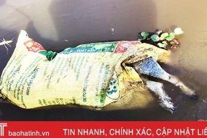Phát hiện xác lợn thả trôi trên kênh thủy lợi ở Lộc Hà
