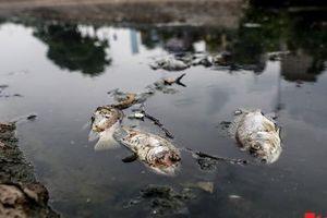 Hình ảnh trái ngược của sông Tô Lịch sau vài ngày xả nước sông Hồng: Cá chết, nước đổi màu đen trở lại