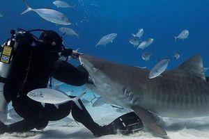 Đồ lặn giúp con người đưa tay vào miệng cá mập an toàn