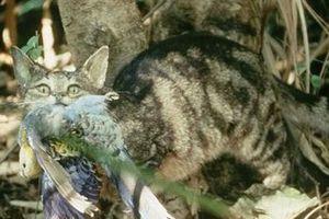 Ác thú giết 2 tỷ động vật mỗi năm: Quá bất ngờ
