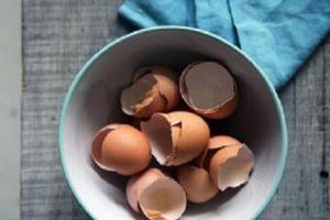 Vỏ trứng nghiền có thể giúp khắc phục tổn thương xương