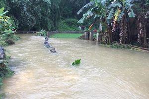 Mưa lớn ở Cao Bằng gây ngập hơn 900 ngôi nhà, 1.000 ha lúa và hoa màu