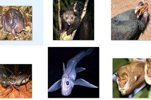 Những loài động vật đáng sợ nhất thế giới mà bạn từng nhìn thấy