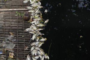 Làm sạch sông Tô Lịch: Phải chặn nguồn nước xả thải trực tiếp