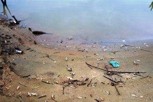Cá chết hàng loạt ở lòng hồ thủy điện Sông Tranh 2