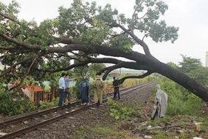 Đường sắt Bắc - Nam tê liệt do cây xanh đổ vào đường ray