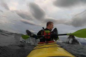 Người chèo thuyền giật mình khi cá voi bất ngờ trồi lên ở sau lưng