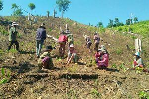 Nhà thầu chậm trễ trồng rừng cho cao tốc Bến Lức-Long Thành