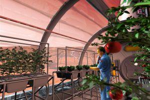 Phát minh mới giúp xây 'ốc đảo xanh' để trồng cây trên sao Hỏa