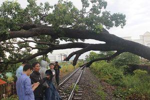 Biên Hòa: Đường sắt Bắc-Nam ách tắc nhiều giờ do cây đổ chắn ngang đường ray