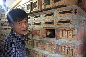 Vĩnh Phúc: Thương binh Hà Văn Giảng nuôi rắn hổ mang làm giàu