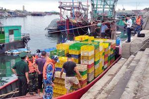 Vận chuyển 35.000 con vịt giống nhập lậu từ Trung Quốc
